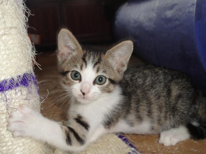 Happy Paws Kitten Rescue in Knoxville, TN