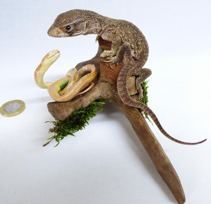Adrian Johnstone, professional Taxidermist since 1981. Supplier to private collectors, schools, museums, businesses, and the entertainment world. Taxidermy is highly collectible. A taxidermy stuffed Snake And Lizard (524), in excellent condition.