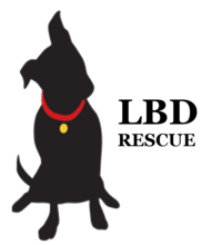Little Black Dog Rescue