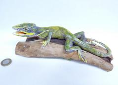 Adrian Johnstone, professional Taxidermist since 1981. Supplier to private collectors, schools, museums, businesses, and the entertainment world. Taxidermy is highly collectible. A taxidermy stuffed Cuban Anole Lizard (707), in excellent condition. Mobile: 07745 399515 Email: adrianjohnstone@btinternet.com
