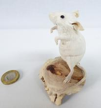 Adrian Johnstone, professional Taxidermist since 1981. Supplier to private collectors, schools, museums, businesses, and the entertainment world. Taxidermy is highly collectable. A taxidermy stuffed adult White Mouse (84), in excellent condition.