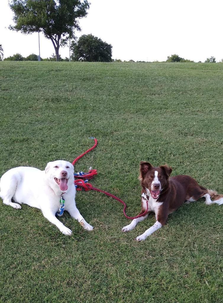 Dash Dog Rescue - Online