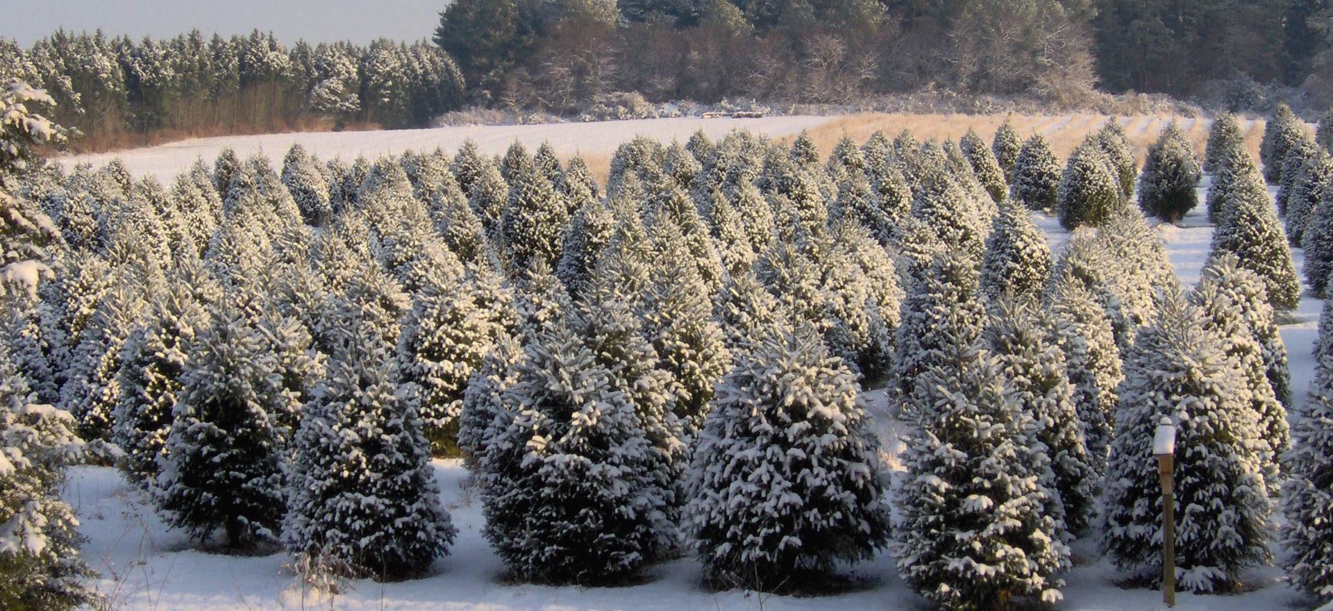 Coleman\'s Christmas Tree Farm - Coleman\'s Christmas Tree Farm