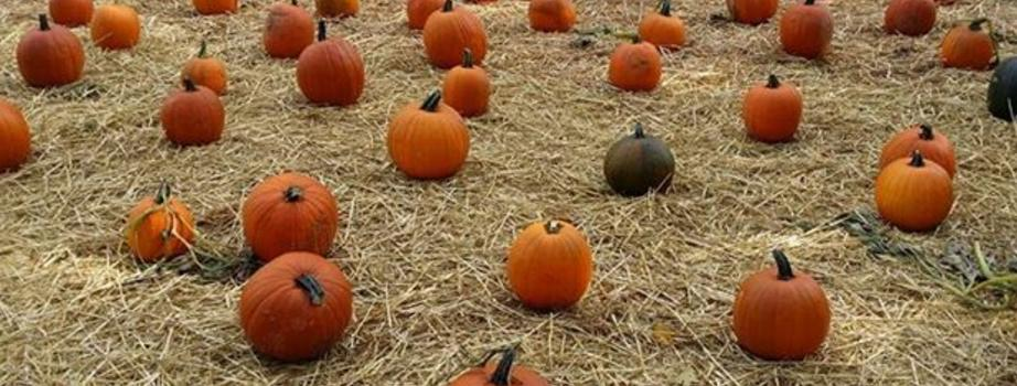 The Haunted Pumpkin Patch