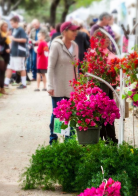 A crowd of shoppers at a Texas market with a woman admiring a broad selection of colorful plants in the Cameo Farm booth.