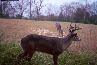 kentucky trophy bucks