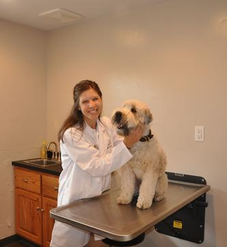THE Dr. Katie in Examination room #1 of Cincinnati Hills Animal Clinic Montgomery Road location