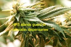 Homeland Protection stands guard at medicinal cannabis locations