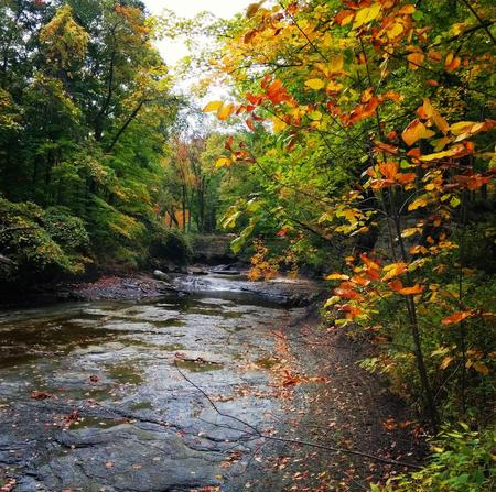 Euclid Creek Reservation