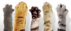 cat paws - high five