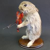 Adrian Johnstone, Professional Taxidermist since 1981. Supplier to private collectors, schools, museums, businesses and the entertainment world. Taxidermy is highly collectable. A taxidermy stuffed baby Rabbit Playing Violin (3) , in excellent condition.