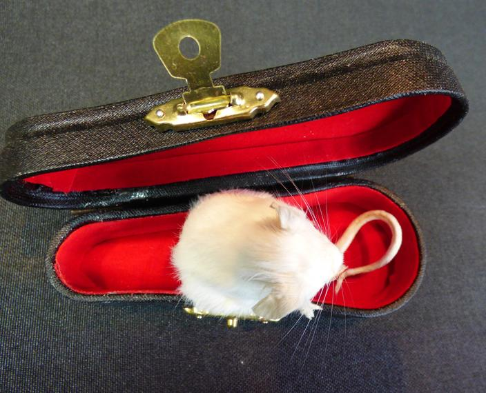 Adrian Johnstone, Professional Taxidermist since 1981. Supplier to private collectors, schools, museums, businesses and the entertainment world. Taxidermy is highly collectable. A taxidermy stuffed little white Mouse In Violin Case (no:7), in excellent condition.