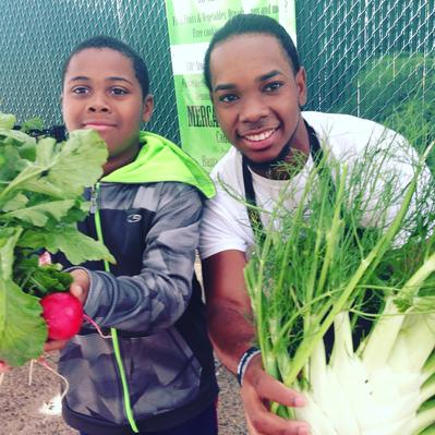 south bronx farmers market, south bronx, fennel, youth market