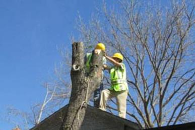 Local Mesquite Branches Removal Services in Lincoln NE | LNK Junk Removal