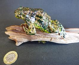 Adrian Johnstone, professional Taxidermist since 1981. Supplier to private collectors, schools, museums, businesses, and the entertainment world. Taxidermy is highly collectible. A taxidermy stuffed European Green Toad (50), in excellent condition.