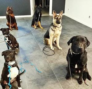 Sitting Obedience Class