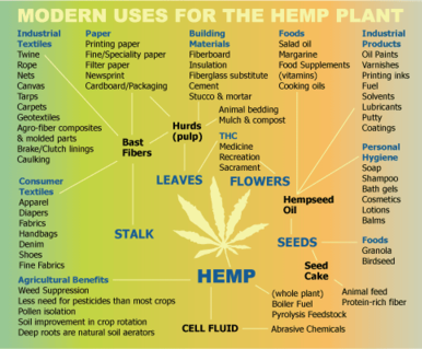 Modern uses for the Cannabis Plant
