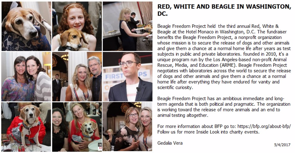 RED, WHITE AND BEAGLE BY THE BEAGLE FREEDOM PROJECT