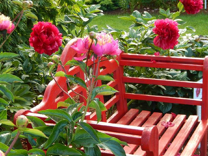 Red Bench with Tom Eckhardt and Henry Bockstoce at Peony Farm