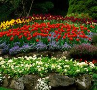 Beautiful flowers that used landscape maintenance services in Birmingham, AL
