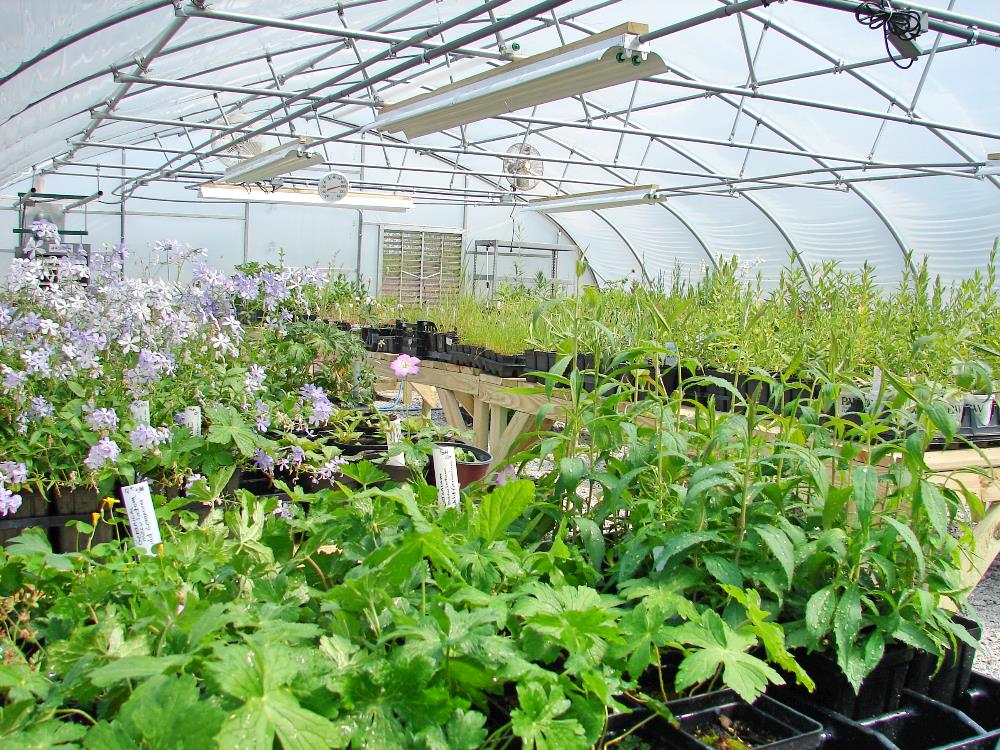 Plant Sale on green lavender, green beets, green bonsai, green bushes, green perennial, green garden design, green flowers, green tulips, green nature, green gardening, green shrubs, green butternut squash,