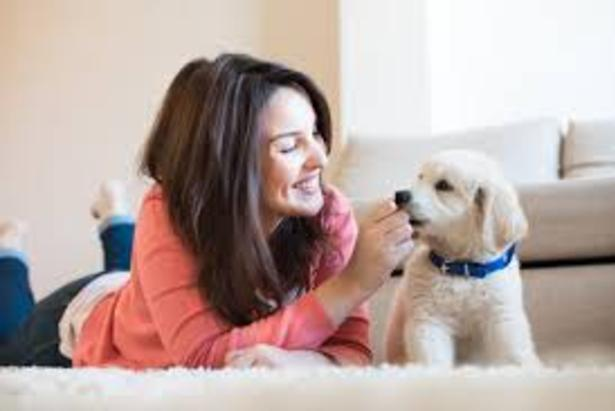 Cleaning Service for Pet Owners and Cost Omaha NE | Price Cleaning Services Omaha