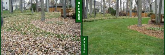 Leaf Removal Before After