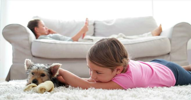 Kid and pet safe product at Green rhino carpet cleaning