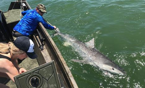 Tiger Shark Fishing Crystal River