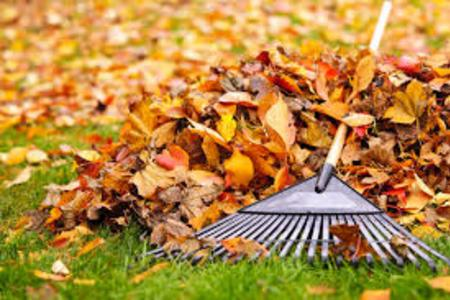 Leaf Removal Leaf Cleanup Yard Debris Removal Fall Leaf Removal Service and Cost in Lincoln NE | LNK Junk Removal