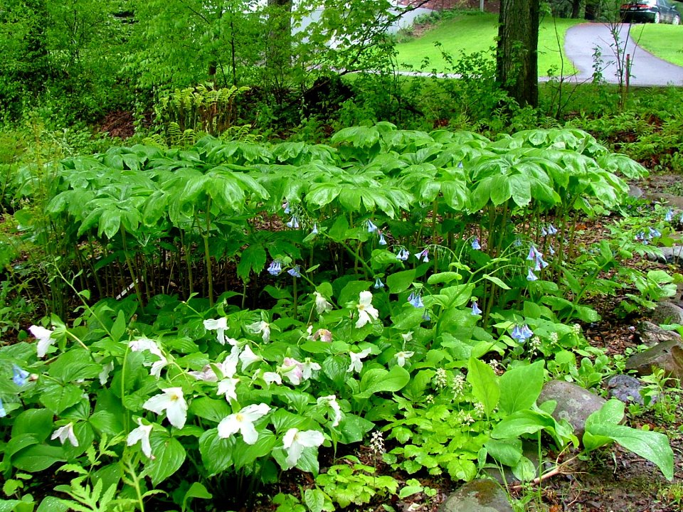 Native Plants Native Plant Garden Design Wildthings Rescue – Native Plant Garden