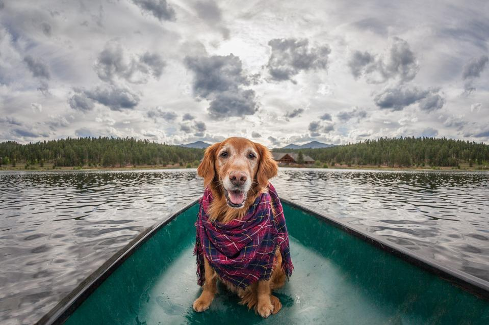 Golden retriever in a row boat in Lake Evergreen, Colorado