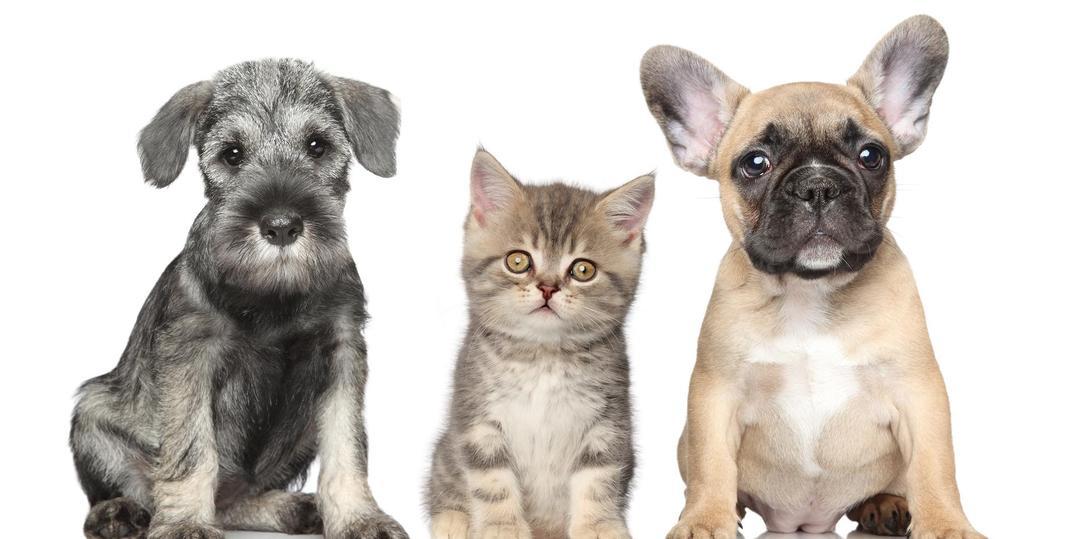 Spay Neuter Dogs Cats