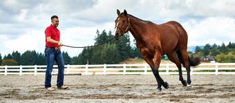 Ck Equine Llc - Horse Blankets For Sale