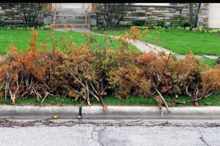 Brush Yard Waste Removal Services in Lincoln Nebraska | LNK Junk Removal
