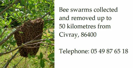 Bee-swarm-removal-Poitou-Charentes-France