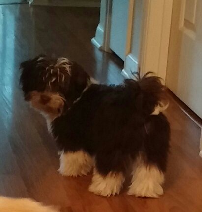 Items Needed for a New Puppy