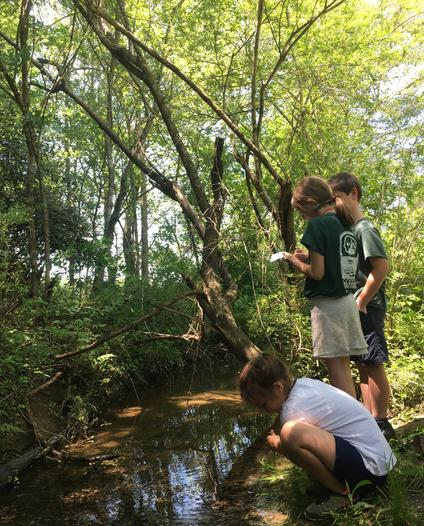 Brevard Academy students explore a creek ecosystem