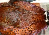 rare pheasant skins, rare pheasant cross hybrids, feather hatbands, pheasant hatbands, maui hawaii, aunty pattiehanna