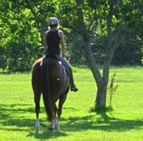Dawson Equestrian Center About