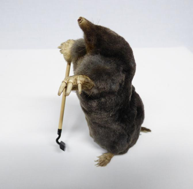 Adrian Johnstone, Professional Taxidermist since 1981. Supplier to private collectors, schools, museums, businesses and the entertainment world. Taxidermy is highly collectable. A taxidermy stuffed Mole With A Hoe (121), in excellent condition.
