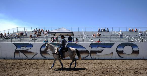 horse and rider at rodeo