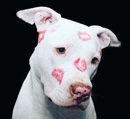 Dog with kiss marks on it