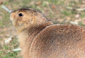 prairie dog control in colorado
