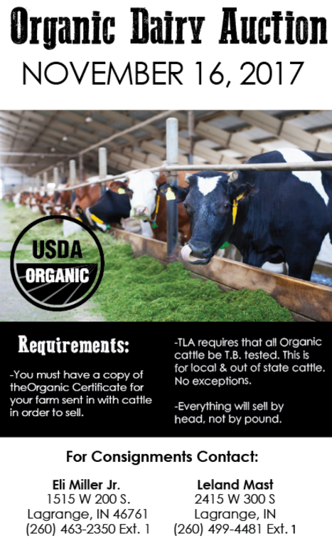 Organic Cattle, Cows, Diary Auction