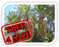 Sell My Tree Tree For Sale Tree 4 Sale Sell My Palm Tree