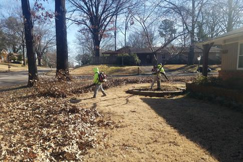 East Memphis Leaf Removal