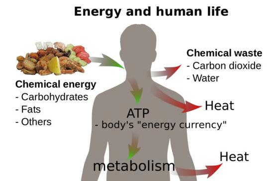 Energy and Human life. Metabolism; chemical Energy on Carbohydrates, Fats ad Proteins