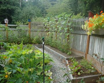 A Western Red Cedar Fence is perfect for keeping critters out of the garden