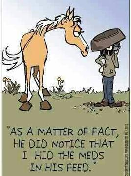 Cartoon, horse dumping his feed on owners head, caption reads As a matter of fact he did notice that i hid the meds in his feed